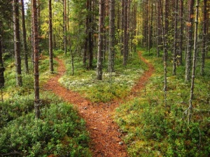 Which path?